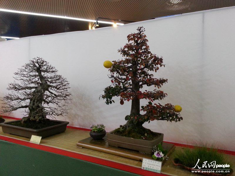 韩国人喜欢什么盆景植物答:松柏类(针叶树),丹枫树类,花树类,果树类