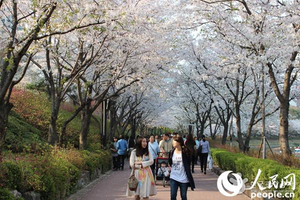 樱花水彩画教程步骤图解