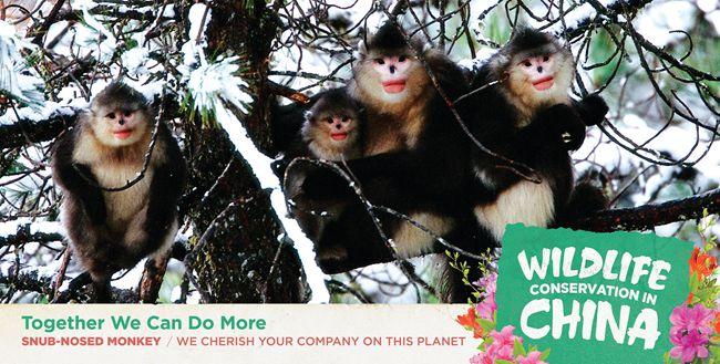 中国驻美使馆发布中国自行车发展和野生动物保护公益广告【3】