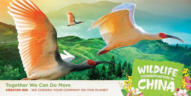 中国驻美使馆发布中国自行车发展和野生动物保护公益广告【7】