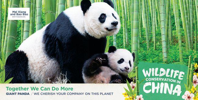 中国驻美使馆发布中国自行车发展和野生动物保护公益广告【2】