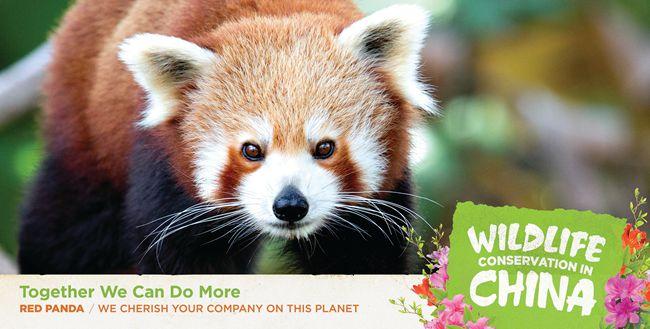 中国驻美使馆发布中国自行车发展和野生动物保护公益广告【5】
