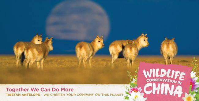 中国驻美使馆发布中国自行车发展和野生动物保护公益广告【6】