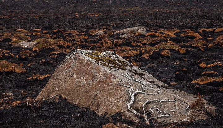 澳远古森林火灾后满目疮痍 千年古树尽毁(组图)