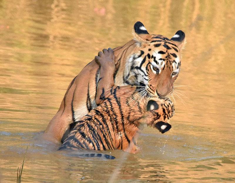 河中洗澡嬉戏 画面温情