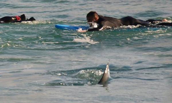 鲨鱼/拼命!澳冲浪者手脚并用划水逃离近在咫尺鲨鱼(组图)