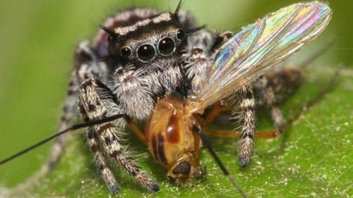 捕食动物排行榜独占鳌头者竟是蜘蛛鲍店吧