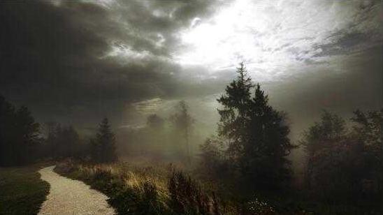 波兰暴风致数万树木被毁 林业面临严重损失
