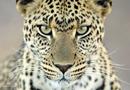 动物野性美令人惊叹