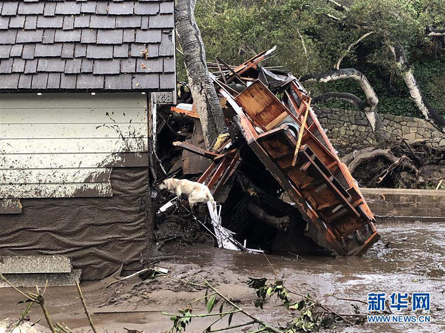 1月9日,在美国加利福尼亚州圣巴巴拉县蒙特西托,搜救犬在被泥石流摧毁的房屋内搜救。