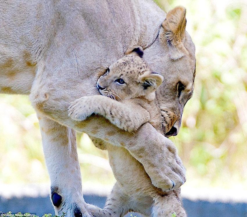 抱着小动物可爱的头像