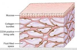 科学家发现人体新器官 可帮助解释癌症扩散