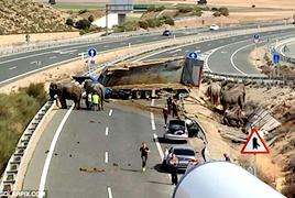 西班牙马戏团卡车倾覆 受伤大象公路上漫游
