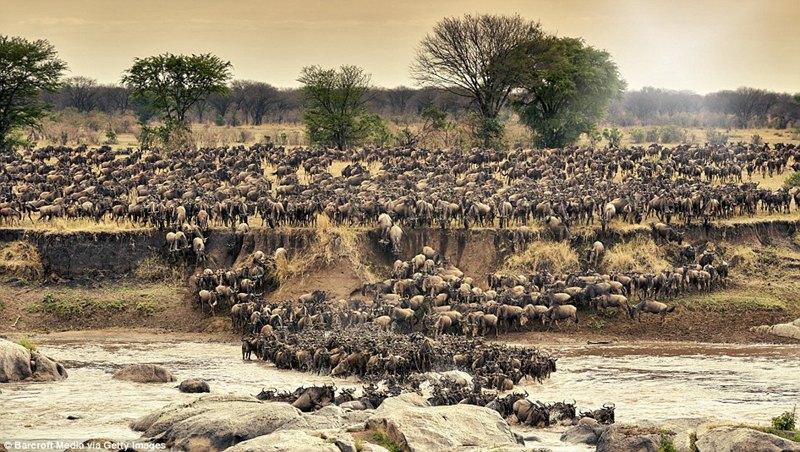 雷霆万钧:记者见证百万动物大军非洲草原大迁徙