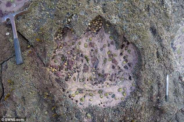 苏格兰发现1.7亿年前恐龙脚印
