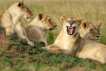 雷霆万钧:非洲草原动物大迁徙