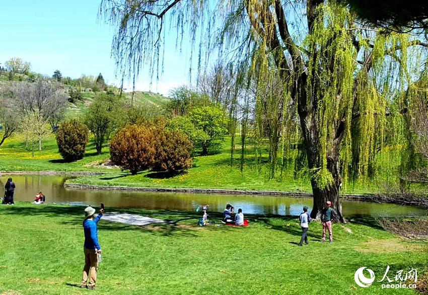 绿地垂柳、小河流水,多伦多市民在享受春色  于世文  摄