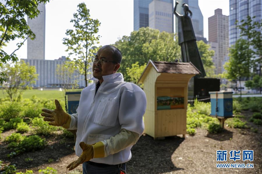 5月24日,在位于纽约的联合国总部,一名养蜂人站在斯洛文尼亚赠送给联合国的蜂房前。