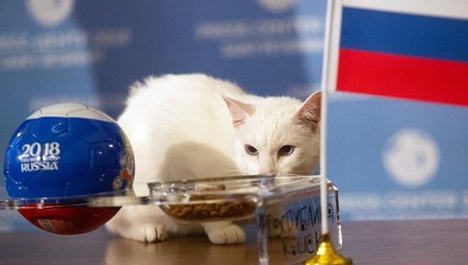 明星待遇!俄罗斯神猫预测2018世界杯揭幕战胜者