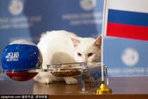 俄罗斯神猫预测2018世界杯揭幕战胜