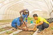 """友谊在中塞人民心中扎下了根在塞内加尔官员和民众看来,中国农业组多年来不断为该国农业发展带来新技术、新理念,更重要的是中国援助""""授人以渔"""",为塞内加尔农业发展带来了真正的帮助。【详细】"""
