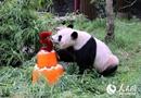 旅荷大熊猫5周岁生日