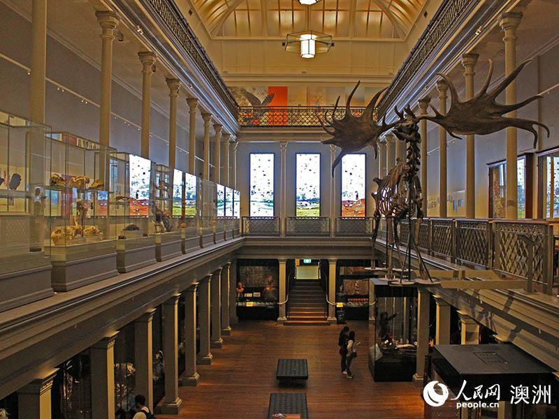 在展馆上空高高挂起的爱尔兰麋鹿骨架(摄影 阴袁扬洋)