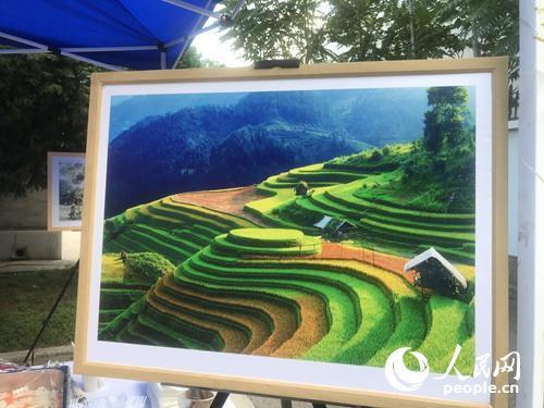 画中是越南梯田美景