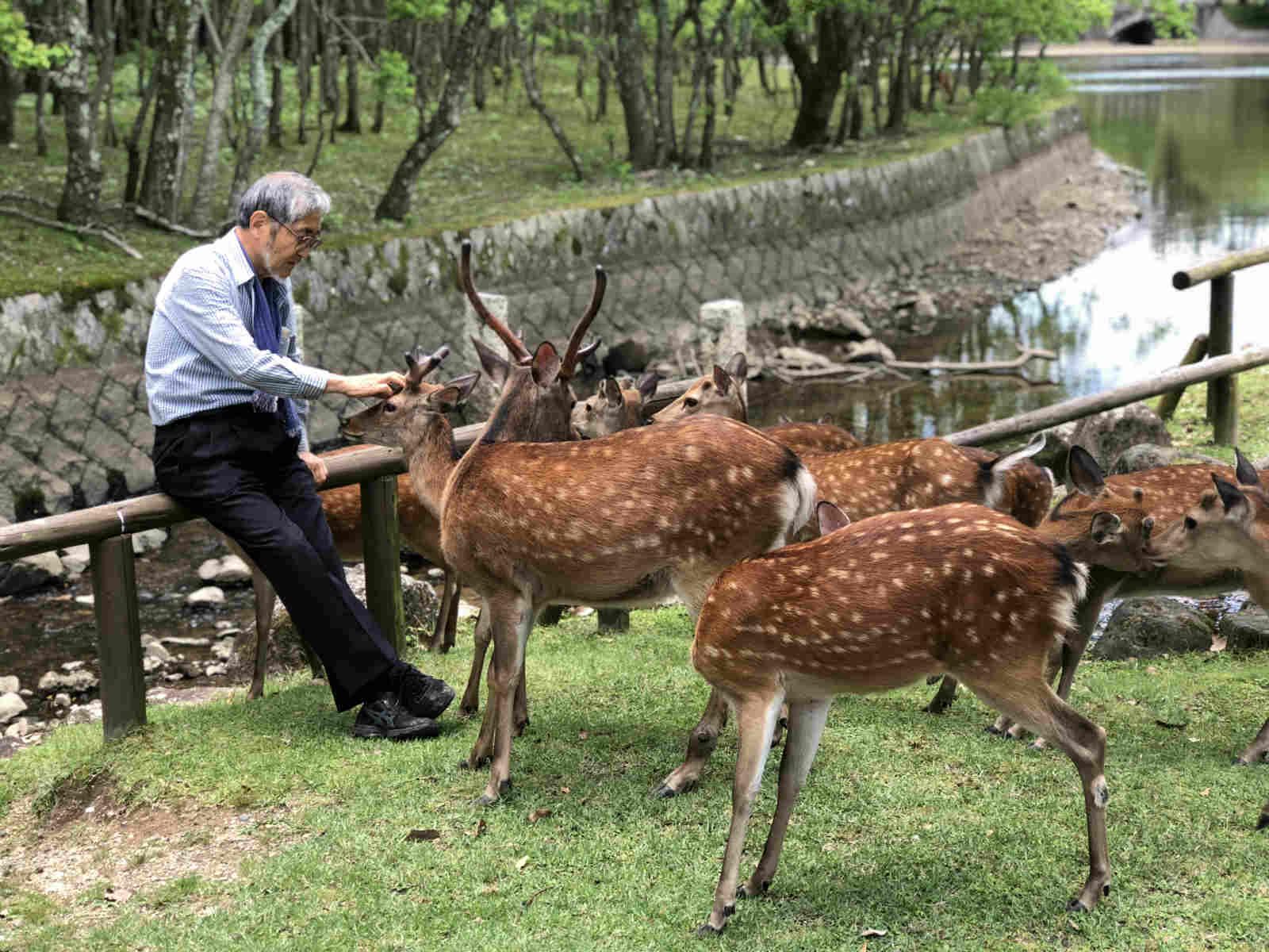 奈良寻鹿 治愈之旅