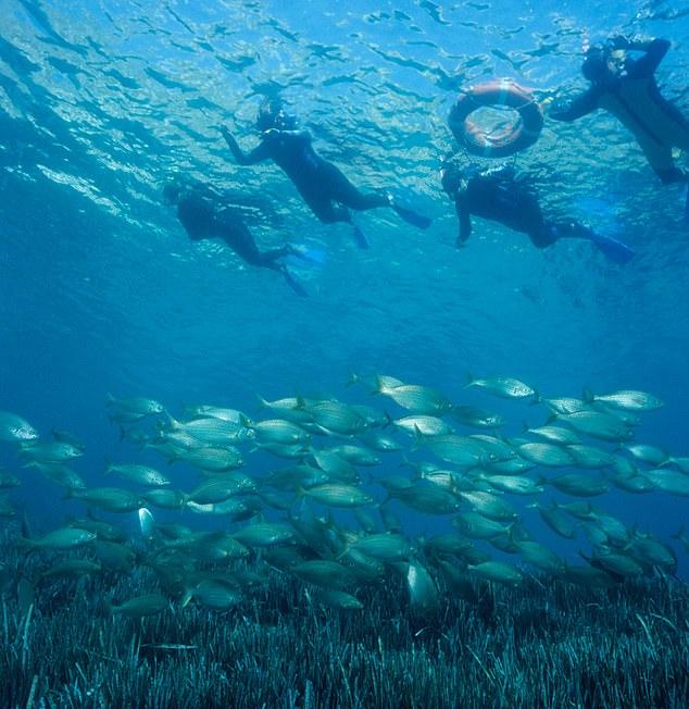 家庭娱乐:在Costa Brava可以体验浮潜或皮划艇。