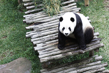 实拍印尼塔曼野生动物园
