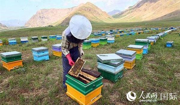 伊朗成为全球第三大蜂蜜生产国
