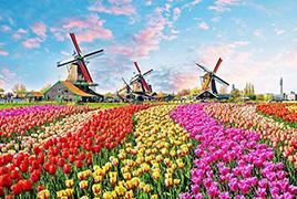 郁金香、游船、甜点 荷兰梦幻般的春季游