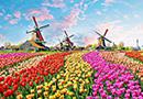 荷兰梦幻般的春季游