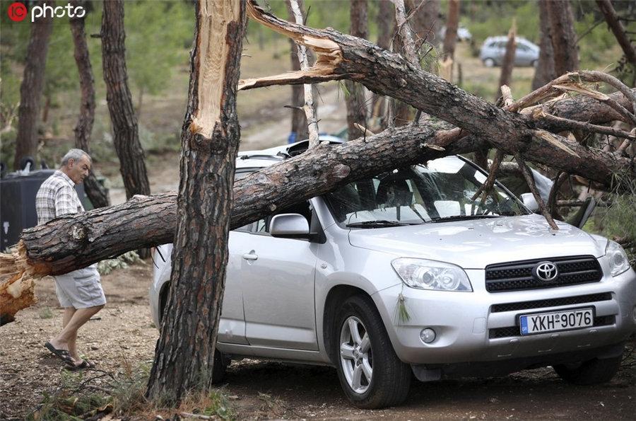 图为树木拦腰折断砸中汽车(IC photo版权作品,请勿转载)