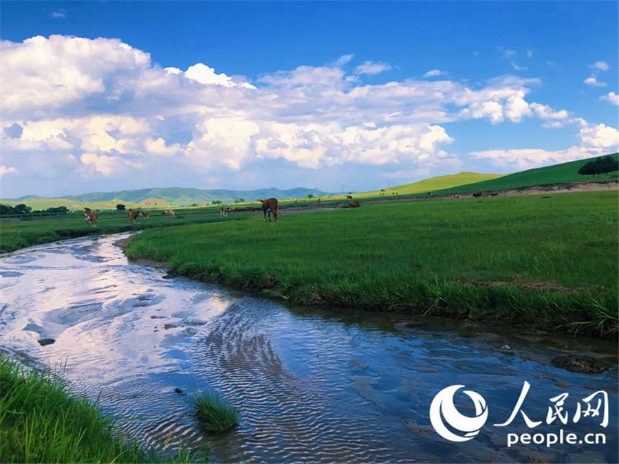 """内蒙古农牧民:坚持""""绿富同兴""""奋进新时代"""