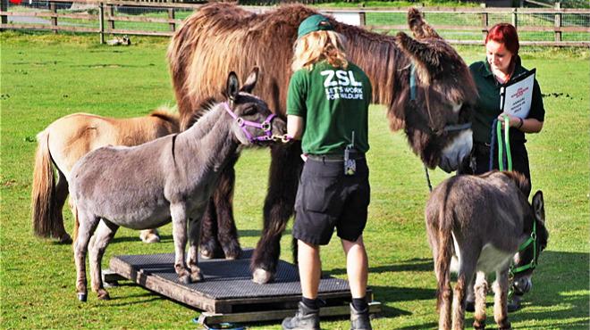 英国最大动物园给3500只动物称重