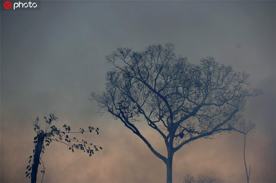亚马逊雨林野火持续燃烧 焚烧后的森林成一片灰烬