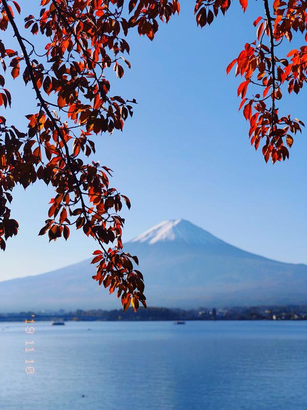 日本秋色红叶正当时