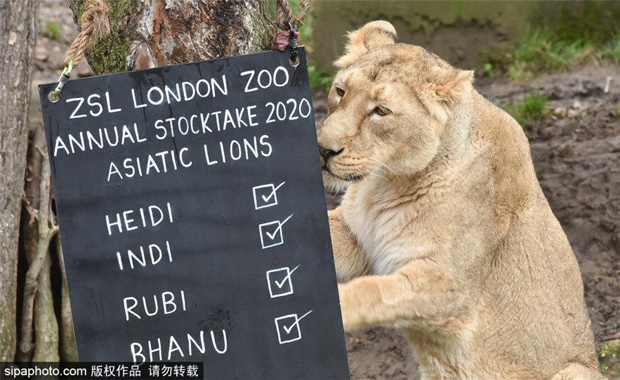 各类动物集体出镜!伦敦动物园进行动物年度盘点
