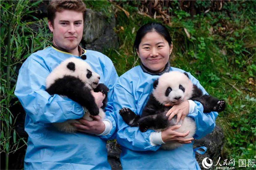 """天堂动物园龙凤胎大熊猫""""宝弟""""和""""宝妹""""获""""年度熊猫幼仔奖""""金奖。"""