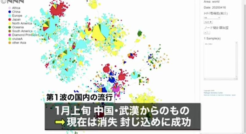 关注|日本国立传染病研究所调查显示 日本现阶段新冠病毒或来自欧美