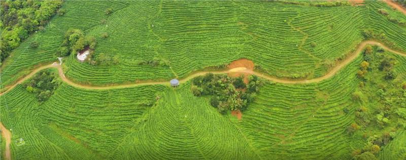 恒香:和合世界香飘远,天南海北一壶春丨2021国际茶日