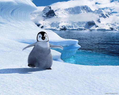 组图:小企鹅可爱出击 北美票房超过007