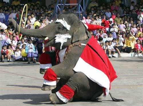世界 曼谷/一头大象穿戴着圣诞老人的服装在泰国曼谷北部大城府为儿童发放...