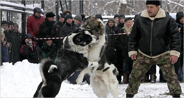 很多动物保护组织呼吁俄罗斯和其它前苏联加盟共和国