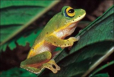 长得像青蛙的动物