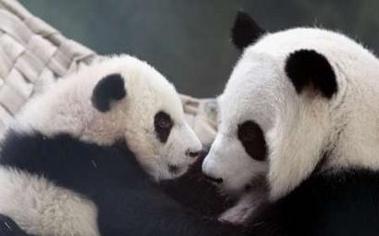 北京动物园和陕西楼观台野生动物救护中心等地