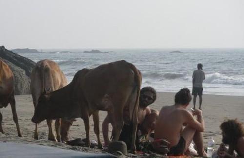 壁纸 动物 马 骑马 500_325