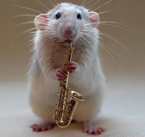 小白鼠图片可爱